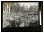 Water runoff in a logged over site by Augustus William Ericson