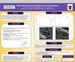 Kombucha: A Chemical Investigation by Austin Ranck-Buhr and Frank Cappuccio