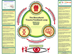 The Biocultural Trauma Feedback Loop by Michelle Irvine