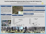 Post-Fire Seedling Recruitment by Burnt Trees at the 2017 Helena Fire by Buddhika Madurapperuma and David Greene