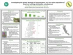 Investigating the genetic diversity of immune genes in a non native population of American bullfrogs (Lithobates catesbeianus) by Luisa N. Segovia and Karen M. Kiemnec-Tyburczy