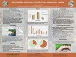 Microhabitat Selection of Pacific Giant Salamander Larvae by Rebecca Watling