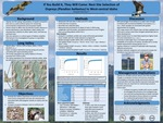 If You Build It, They Will Come: Nest Site Selection of Ospreys (Pandion haliaetus) in West-central Idaho by Elizabeth Meisman, Tyrell Styhl, Bryan Krouse, Marc Bechard, Robert Miller, Matthew Johnson, and Dusty Perkins