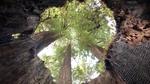 Hollow Trees by Kody Smith 9720441